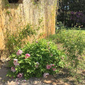relaxation, rest, calm, nature, guest room, gite, Piolenc, Provence, Avignon, Orange