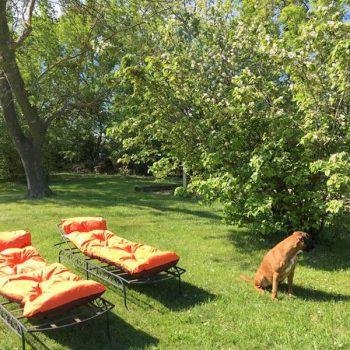 détente, repos, calme, nature, chambre d'hôte, gîte, Piolenc, Provence, Avignon, Orange